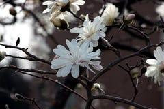 Цветки заново родившийся Стоковые Изображения
