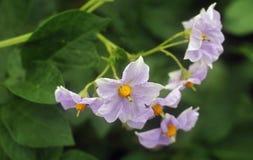 цветки засевают белизна травой Стоковая Фотография
