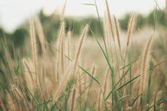 Цветки засевают запачканная предпосылка травой Стоковое Изображение RF