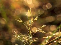 Цветки засевают запачканное bokeh травой стоковая фотография rf