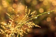 Цветки засевают запачканное bokeh травой стоковая фотография