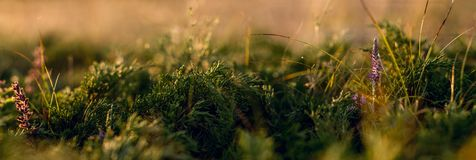 цветки засевают одичалое травой Стоковые Фотографии RF