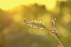 Цветки захода солнца стоковые изображения