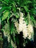 Цветки зацветая внутри graden Стоковое Изображение