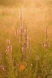 Цветки зацветая в лужке Стоковые Изображения RF