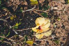 цветки зацветая в саде & x28; spring& x29; стоковая фотография rf