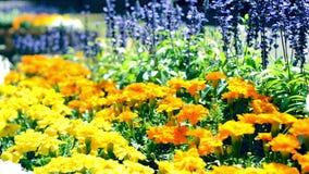 Цветки зацветая в людях цветников акции видеоматериалы