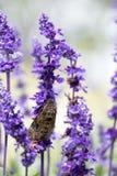 Цветки зимы яркие цвета Стоковые Изображения RF