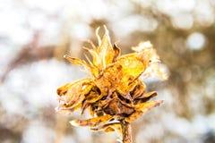 Цветки зимы Стоковое фото RF
