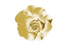 Цветки золота Стоковая Фотография RF
