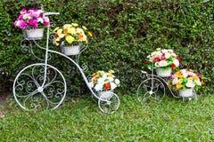 Цветки изобретателя велосипеда Стоковое фото RF