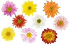 цветки изолировали Стоковые Изображения RF