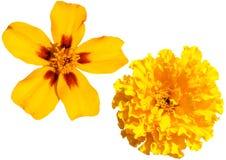 цветки изолировали Стоковые Фотографии RF