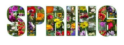 цветки изолированные весна Стоковые Изображения RF
