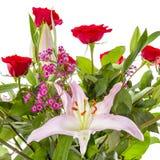Цветки изолированные на белизне Стоковые Изображения RF