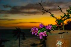 цветки изолировали белизну бака Заход солнца, остров Apo, Филиппины Стоковое фото RF