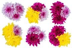 цветки изолировали лилию Стоковое фото RF