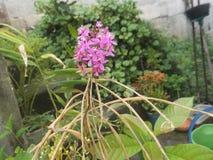 Цветки имбиря стоковая фотография rf