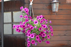 цветки и лампа смертной казни через повешение Стоковые Изображения