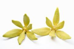 Цветки иланг-иланга Стоковые Фото