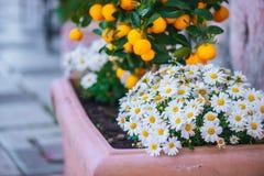 Цветки и апельсины в Сиракузе, Сицилии Стоковые Изображения