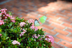 Цветки и 2 бабочки Стоковое Изображение