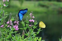 Цветки и бабочки Стоковое фото RF