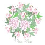 Цветки и белые розовые пионы иллюстрация вектора