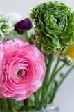 Цветки и бутоны лютика Стоковые Фото