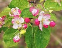 Цветки и бутоны Стоковое Фото