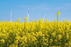 Цветки и ветротурбины рапса весной стоковое фото