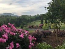 Цветки и взгляд горы Стоковые Фото