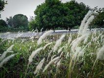 Цветки и год сбора винограда травы Стоковое Изображение