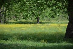 Цветки и дерево весны белые в Турции Стоковые Изображения