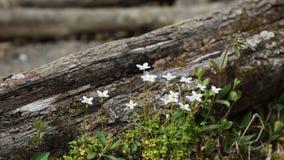 Цветки и дерево Стоковое Изображение RF
