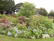 Цветки и заводы сада парка Стоковое Фото
