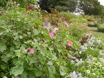 Цветки и заводы сада парка Стоковые Изображения