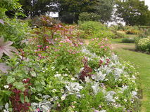 Цветки и заводы сада парка Стоковые Фото