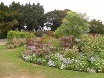 Цветки и заводы сада парка Стоковое Изображение