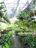 Цветки и завод деревьев в крытой ферме Стоковое Изображение