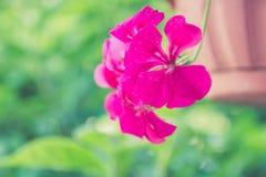 Цветки и запачканная зеленая предпосылка стоковое изображение rf