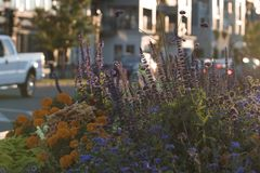 Цветки и заход солнца, просто красивые Стоковое Изображение RF