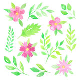 Цветки и листья акварели Стоковые Фотографии RF