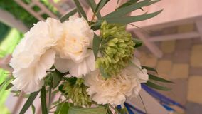 Цветки и листья зеленого цвета сток-видео