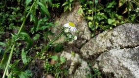 Цветки и камни Стоковое фото RF