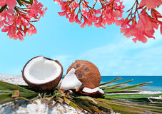 Цветки и кокосы Стоковое фото RF