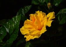 Цветки и листья красивы стоковые фотографии rf