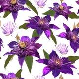 Цветки и листья Clematis фиолетовые Безшовный вектор patern с Стоковое Фото