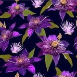 Цветки и листья Clematis фиолетовые Безшовный вектор patern с Стоковое Изображение RF