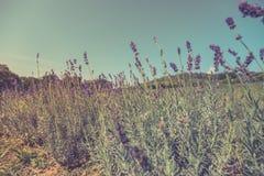 Цветки и луг крупного плана лета яркий ландшафт Вдохновляющая предпосылка знамени природы Стоковое Изображение RF
